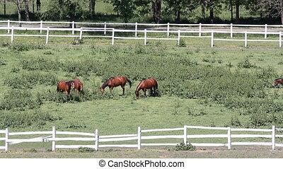 horses in corral on farm