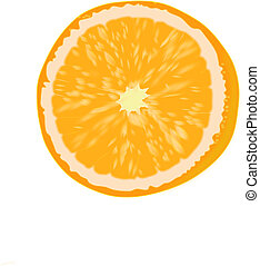 Orange fruit - Orange fruit - vector illustration