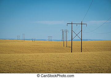 Wheat fields, power lines, eastern Washington