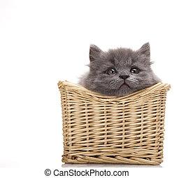 British little kitten