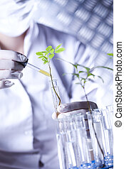 Plants in laboratory - Plants in laboratory