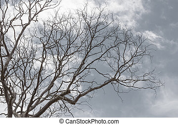 Branch of dead tree - Dead tree without leaves on gray...