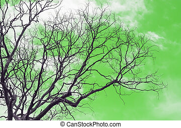 Branch of dead tree - Dead tree without leaves on green...