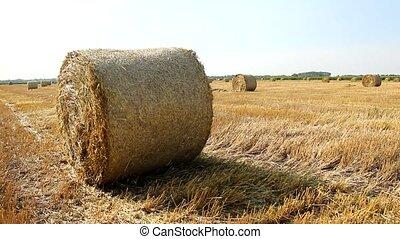 Hay field with round haystacks