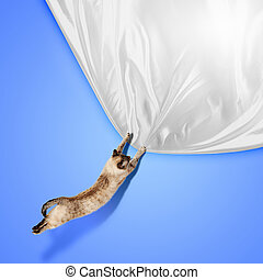 Siamese cat - Image of jumping Siamese cat playing with with...