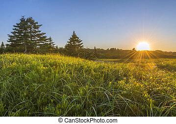napnyugta, felett, füves, zöld, mező