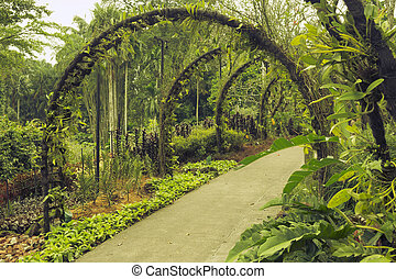 Singapore Botanical Garden - scenic pathway under artificial...