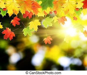 leaves - Colorful autumn leaves in blurred background Autumn...