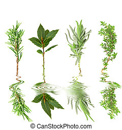 Herb Leaf Selection - Fresh herb sprigs of rosemary, bay,...