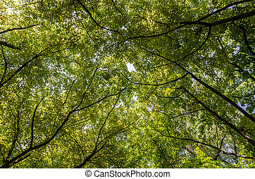 Summer Trees Foliage