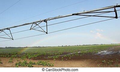 Sprinklers Watering Field
