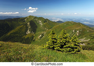 Fatra mountain panorama with flower - Slovakia