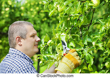 Man with gardener shears near apple tree