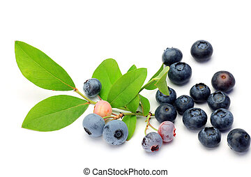 blueberry - I took many blueberries in a white background