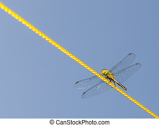 Dragonfly Walking On Rope Close Up