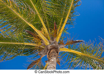 Close-up of tropical coconut palm tree with yellow coconut...