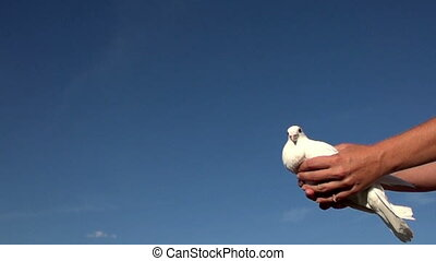 man released pigeon into the sky, Slow Motion