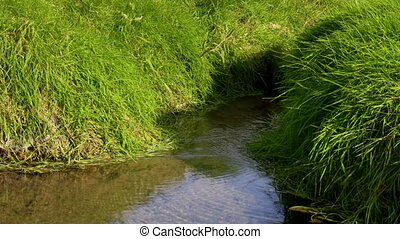 River source - A little clean stream of water flows through...