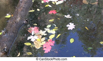 Colorful Leaves on Water