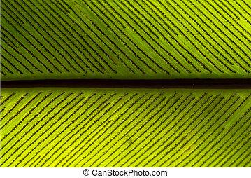 spore of bird s nest fern leaf
