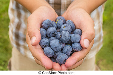 Boy hands holding blueberries - Boy hands holding ripe...