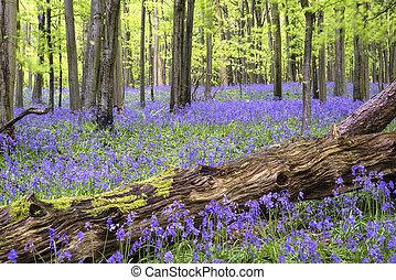 vibráló, harangvirág, szőnyeg, eredet,...