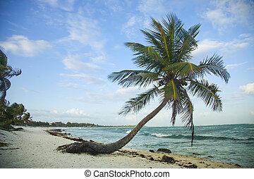 praia, paraisos
