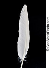 white feather - white bird feather on black background