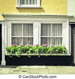 Window garden - Selection of plants on a cottage window...