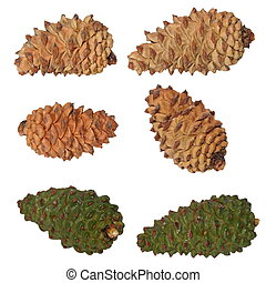 pine cones collection isolated