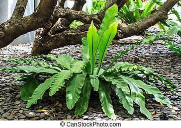 Plant species in tropical forests - agriculture, background,...