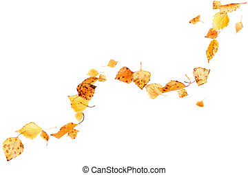 Falling Autumn Leaves - Autumn leaves falling and spinning...