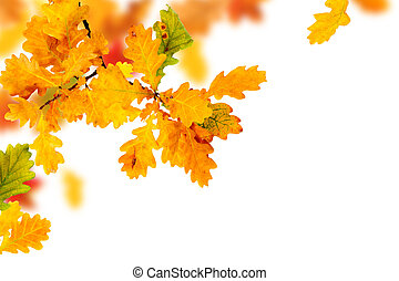 Autumn Oak Leaves - Branch of colorful autumn oak leaves...