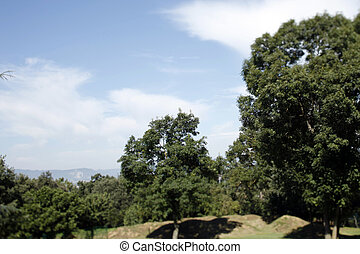 la serra trees - trees and clouds with the pyrennes...