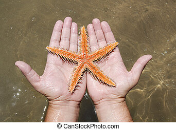 Starfish in the hands