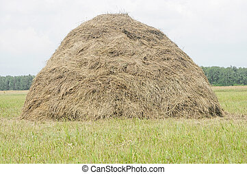 old traditional hay stacks, typical rural scene