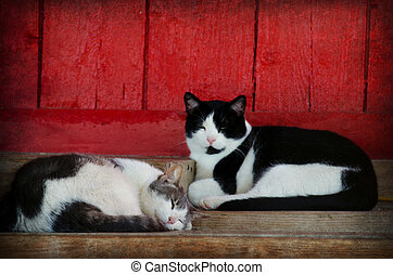 barn cats napping - Pair of barn cats napping by red barn