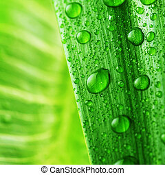 bright green leaf and water drop close up