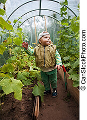 boy in a greenhouse with cucumbers - little boy in a...