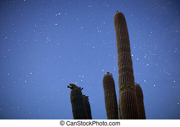 stars and cactus - blurred stars in the sky behind a cactus