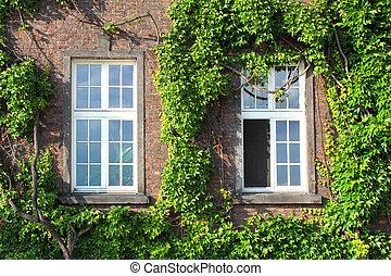 overgrown windows