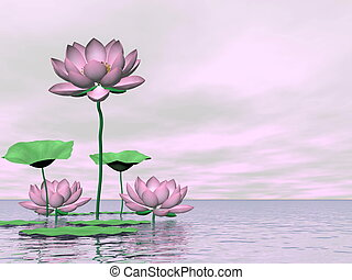 rose, waterlilies, lotus, fleurs, -, 3D, render