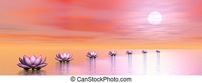 Water lilies steps to the sun - 3D render