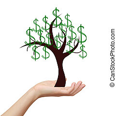 Woman hand holding money tree with dollars sign isolated on...