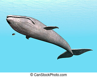 Blue Whale - Computer generated 3D illustration with a Blue...
