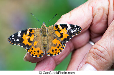 lady's hand holding butterfly