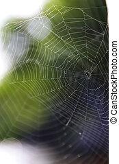 Spiderweb - Detail of empty spiderweb without spider
