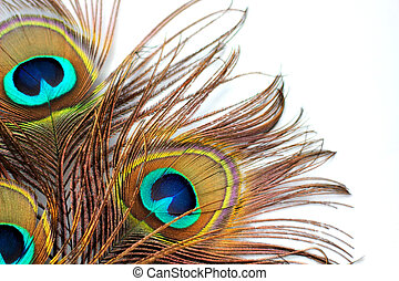 Three peacock feathers on a white background