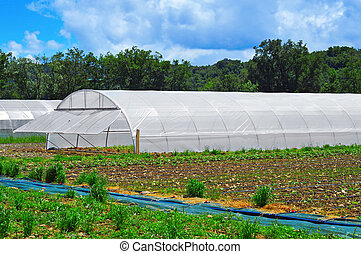high tunnels - some high tunnels with different cultivars in...