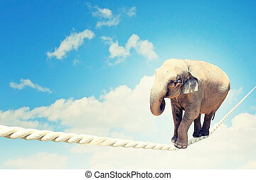 Elephant walking on rope - Image of elephant walking on rope...